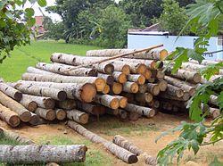 Compramos fuera la madera que podríamos cultivar aquí