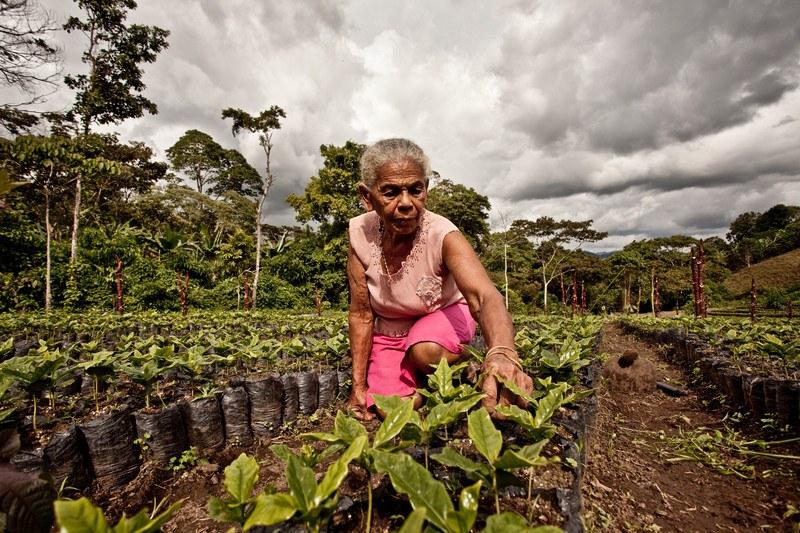 Triodos Bank colabora con el lanzamiento del café Tierra Madre de Intermón Oxfam