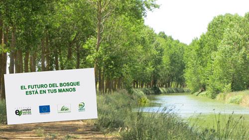 ¿Cómo se realiza una gestión forestal sostenible?