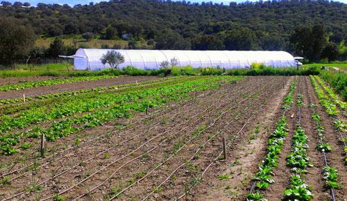 La Comunidad de Madrid incrementa sus explotaciones ecológicas un 19%, el mayor aumento de España