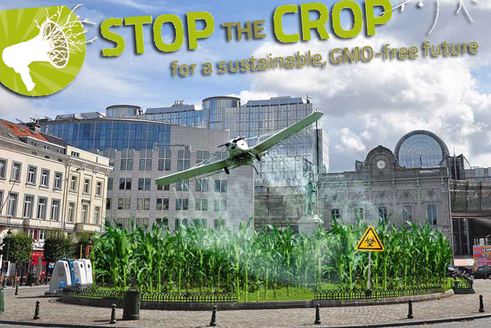 El maíz ecológico desaparece contaminado por los transgénicos