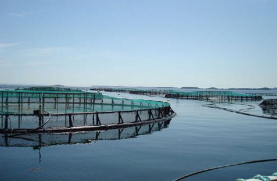 ¿Tiene futuro la acuicultura ecológica?
