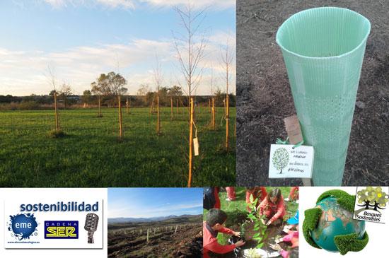 Educación ambiental y RSC creando bosques sostenibles