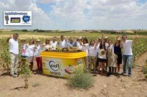 El cuidado sostenible de los campos de girasol