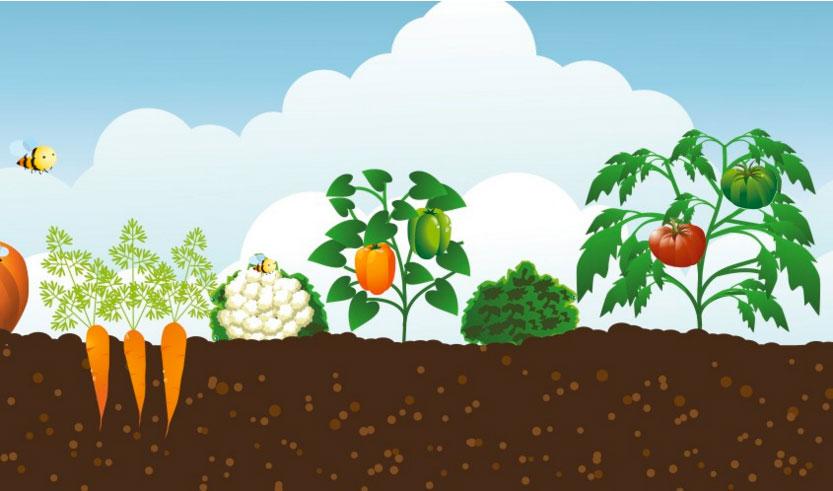 Huertos-Escolares-Ecológicos-crowdfunding-Fundacion-Triodos-portada
