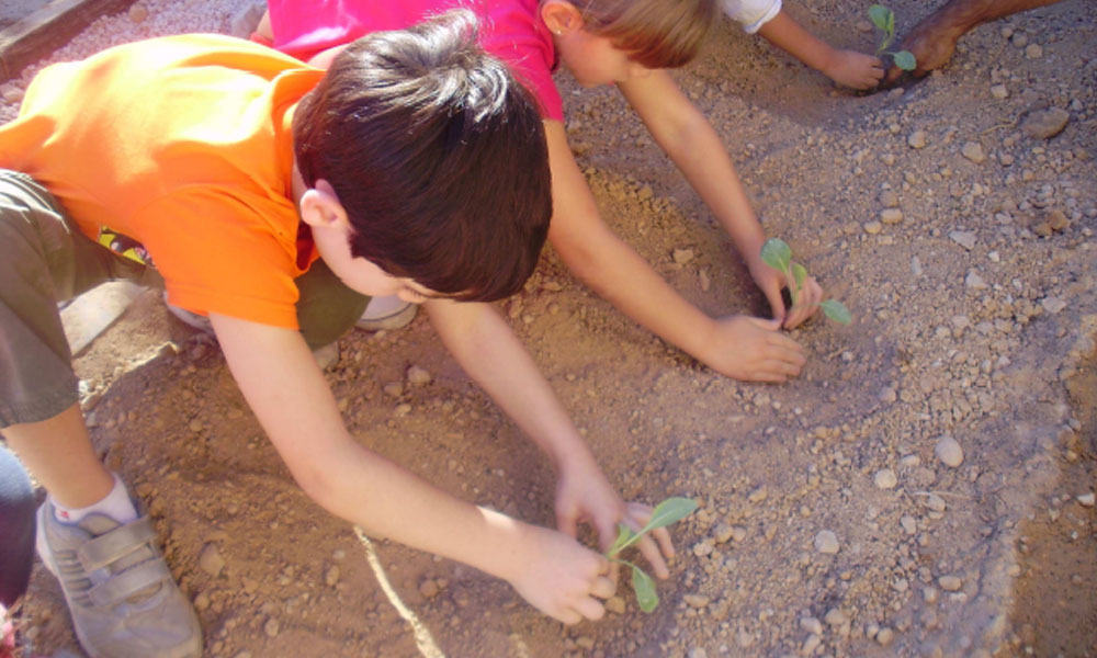 Crowdfunding para apoyar huertos escolares ecológicos