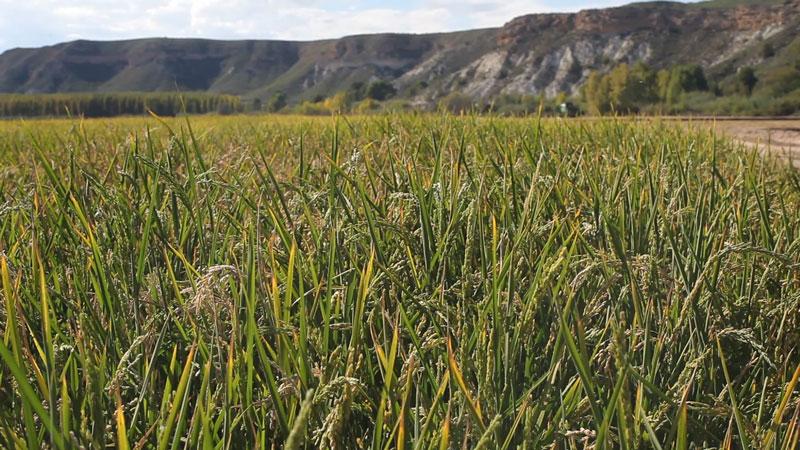 TV-bio-biocop-yo-tambien-soy-agricultor-El-Mundo-Ecologico-4