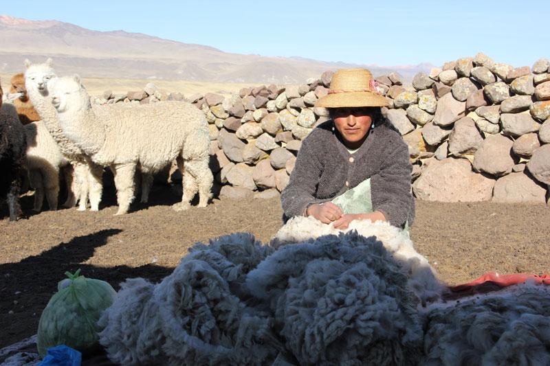 las-manuelas-IED-Madrid-moda-alpaca-peru-el-mundo-ecologico-4