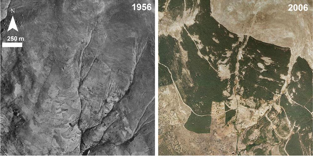 Sierra Nevada cambio climático especies vegetales animales
