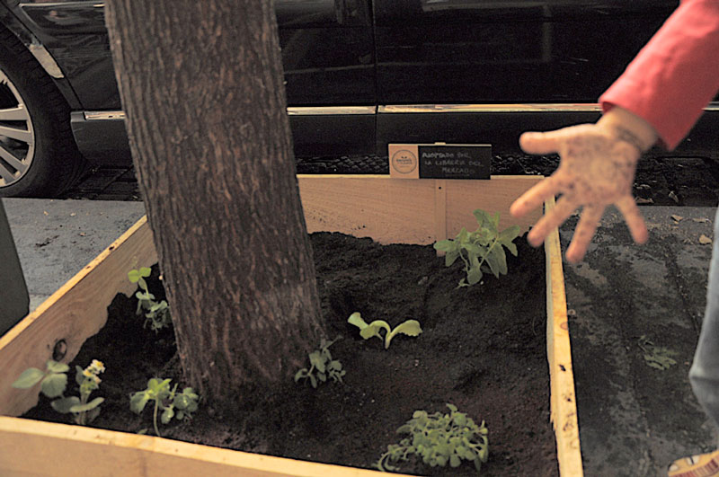 Lavapiés se planta alcorque Madrid Germinando