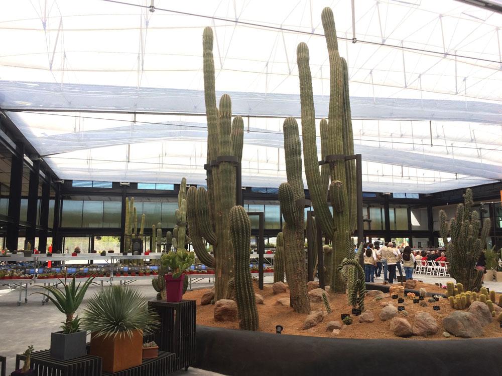 Desert city san sebastián de los reyes plantas xerofíticas vivero paisajismo sostenible, cactus Madrid invernadero