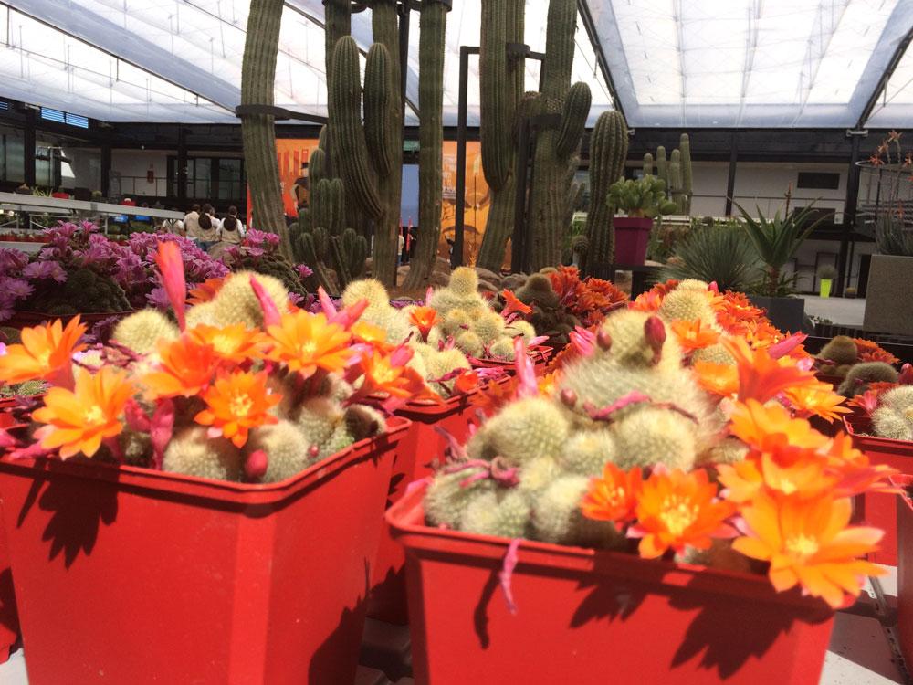 Desert city san sebastián de los reyes plantas xerofíticas vivero paisajismo sostenible, cactus flor Madrid invernadero