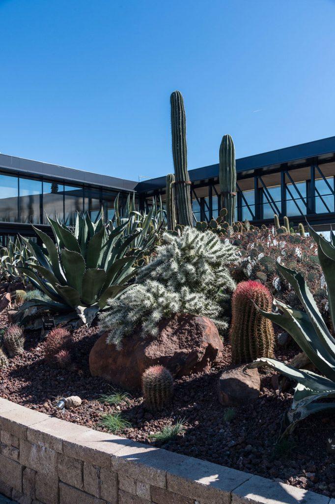 Desert city san sebastián de los reyes plantas xerofíticas vivero paisajismo sostenible, cactus Madrid