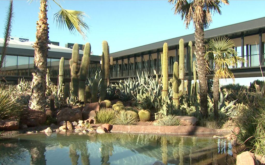 Desert city san sebastián de los reyes plantas xerofíticas viviro paisajismo sostenible