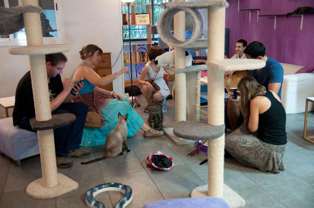 La Gatoteca café adopción de gatos Madrid Lavapiés