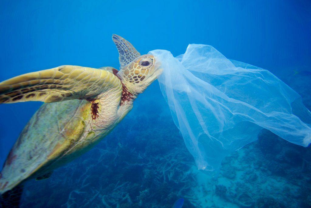Greenpeace campaña mar oceanos plastico
