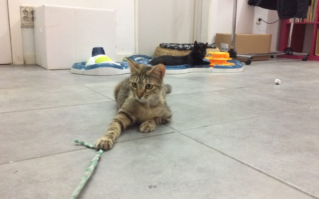La Gatoteca café adopta gatos Madrid Lavapiés
