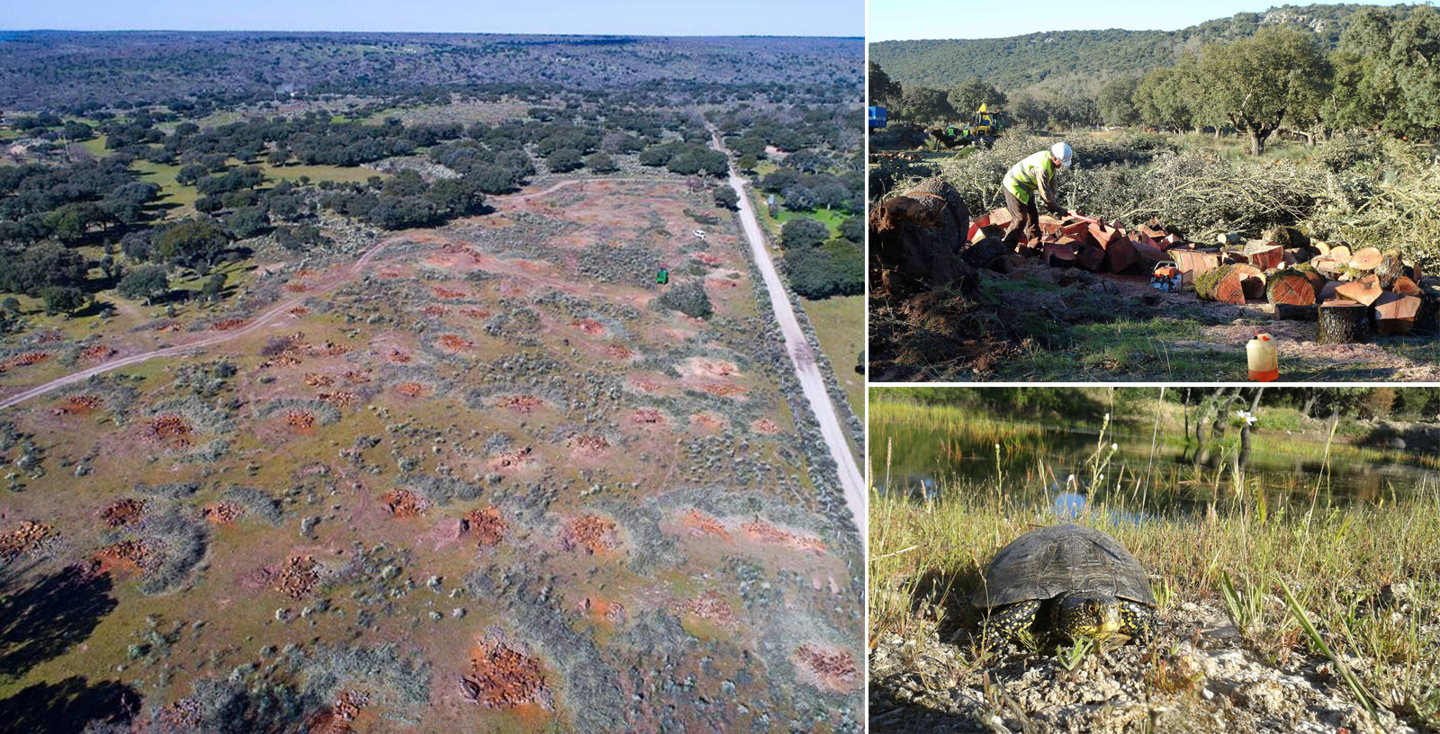 El uranio amenaza la fauna salvaje