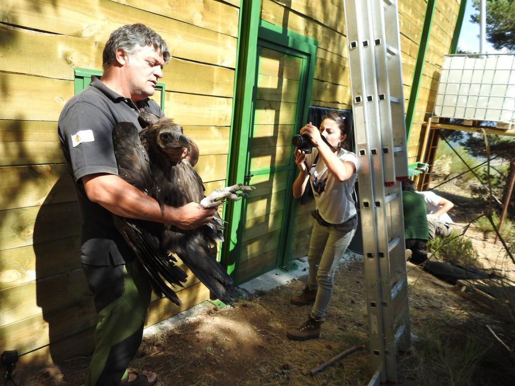 GREFA introducción Buitre negro Sierra de la Demanda Cadena SER El Mundo Ecológico