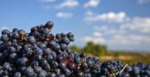 Ruta del vino Yecla 2017 Enoturismo Murcia