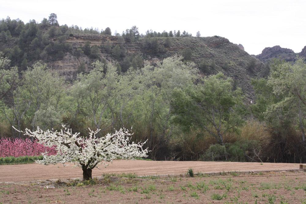 Turismo botanico El-Mundo Ecologico ecoturismo educacion ambiental 3