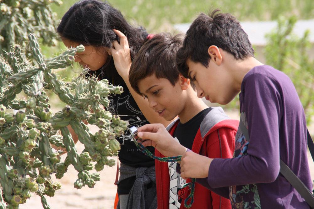 Descubrir el mundo vegetal a través del turismo botánico