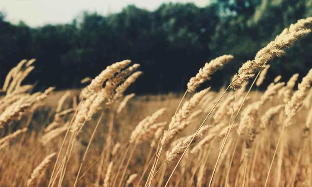 Recta final para regularizar los fertilizantes y fitosanitarios en la producción ecológica
