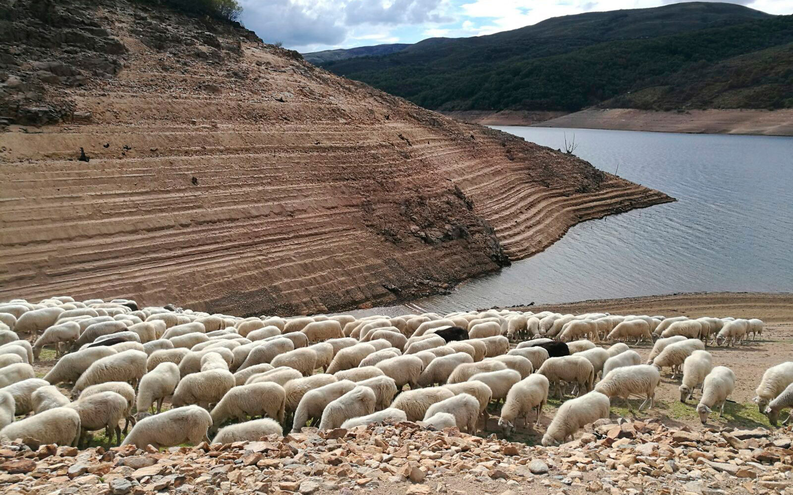 UPA califica la sequía de «histórica» y pide al Gobierno que actúe