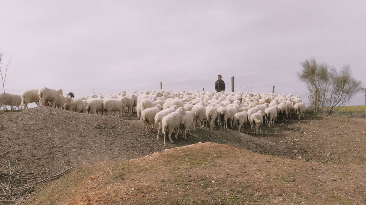 lobos ganaderia coexistencia ecologistas en accion