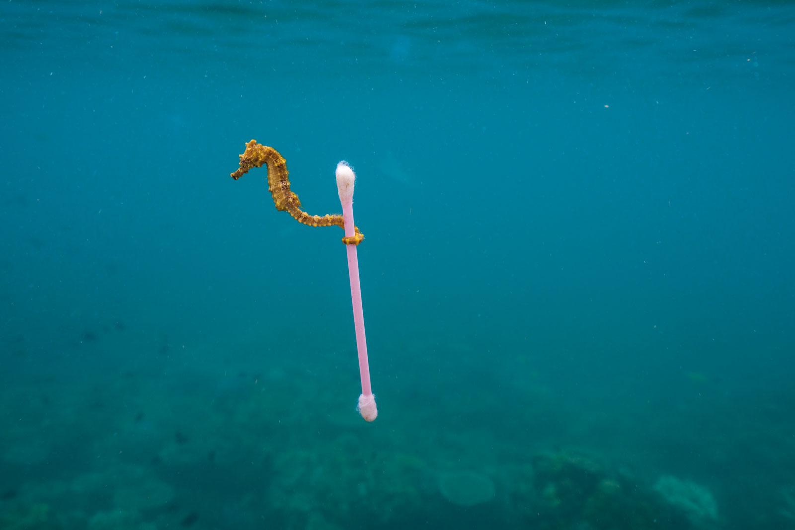 Elige, ¿planeta o plástico?