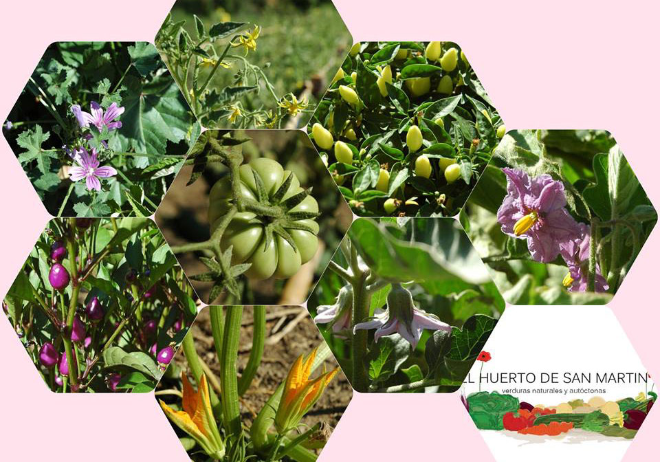 La agricultura ecológica Huerto San Martín de Valdeiglesias Madrid