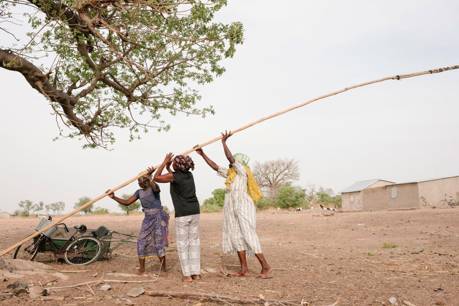 Ecosia buscador planta arboles el mundo ecologico