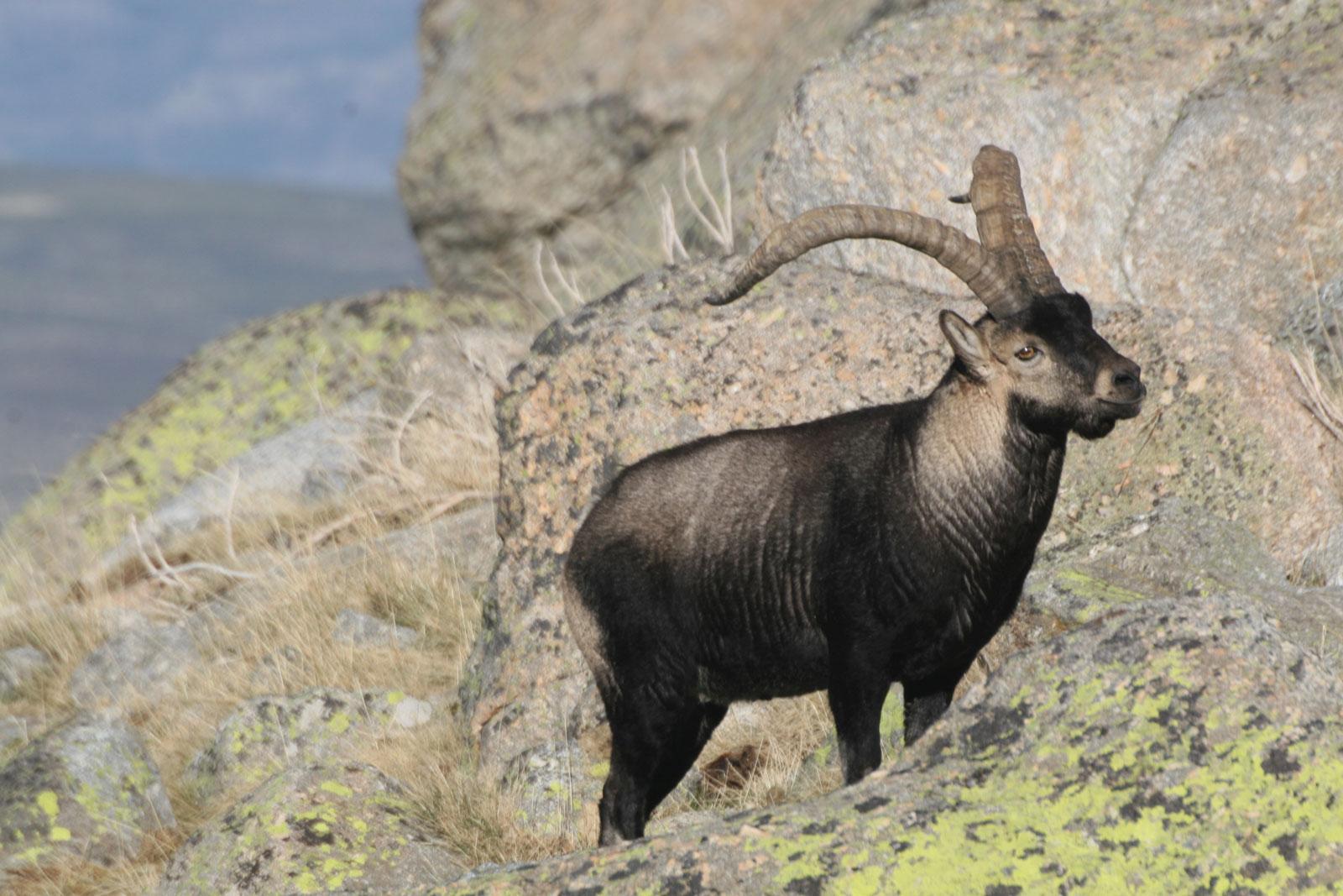 Manzanares el real naturewatch 2018 ecoturismo Sierra Guadarrama