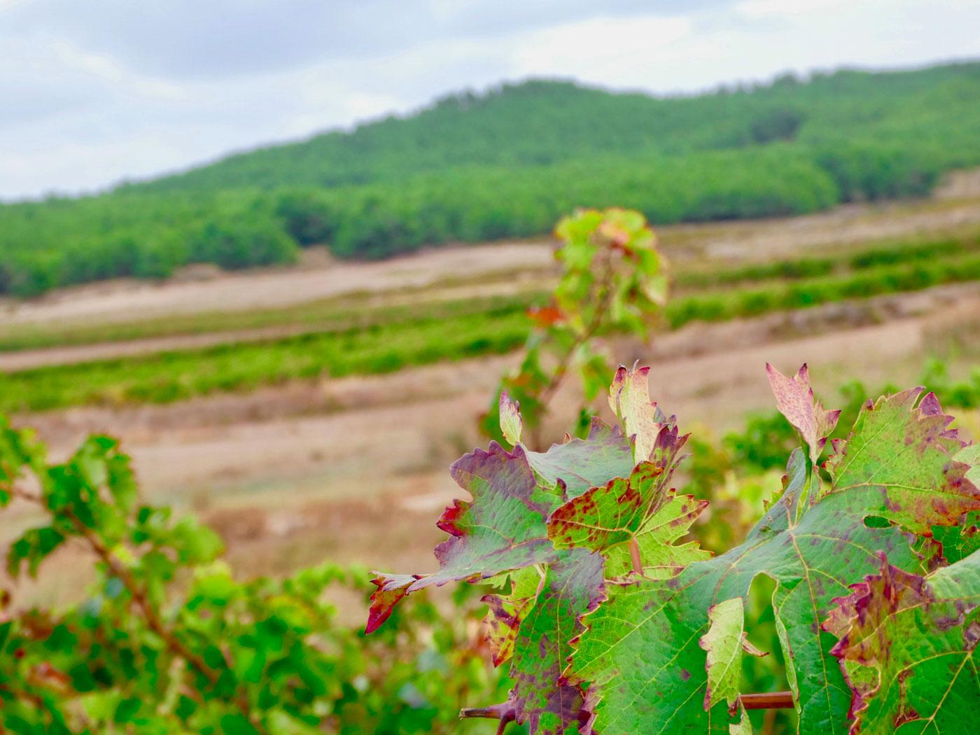Bodegas Bagordi vino ecológico La Rioja