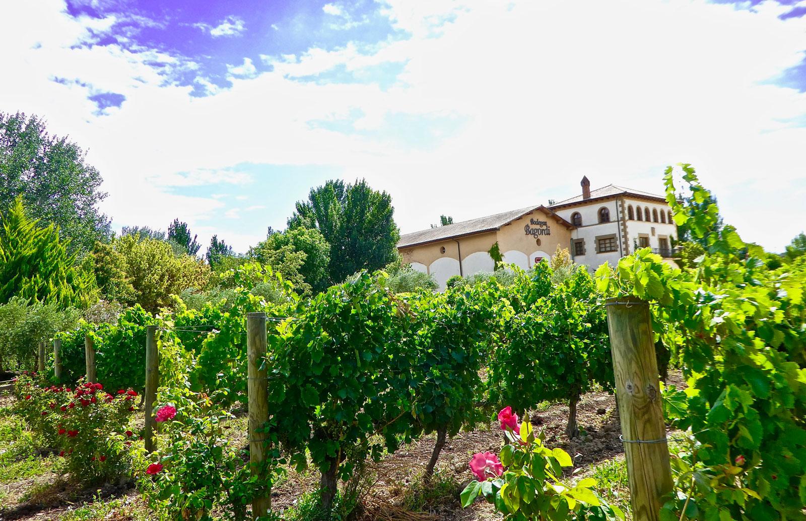 Bodegas Bagordi, pioneros de la viticultura ecológica