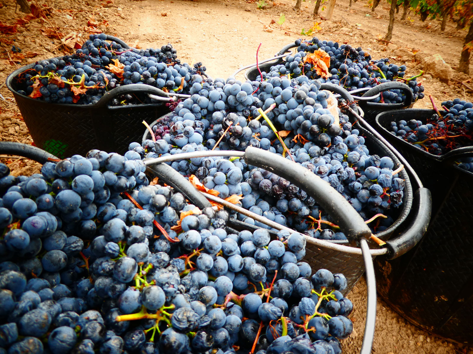 Vino ecológico La Rioja Bodegas Bagordi