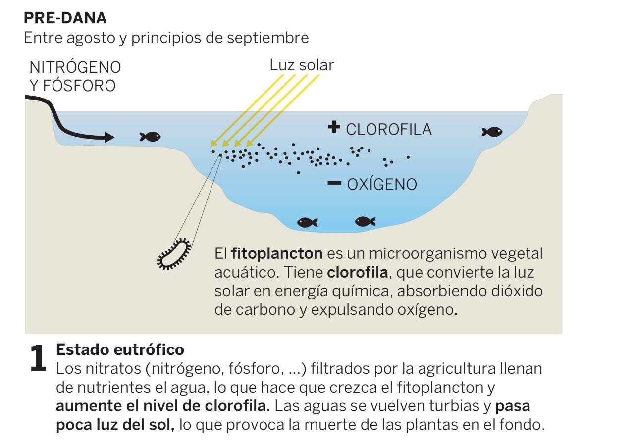 Mar menor ecologia problema ambiental muertes peces