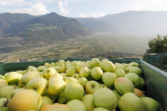 Agricultura ecologica manzanas Val Venosta el mundo ecologico