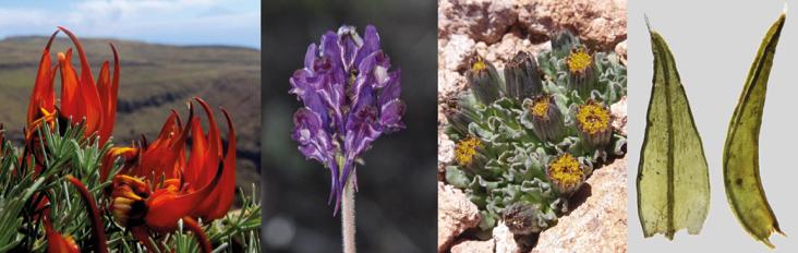 Sociedad botánica española nuevas especies plantas españa