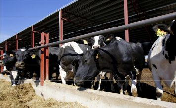 Granja leche residuos organicos