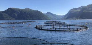 Pesca y acuicultura