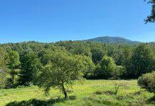 SEK plantación de arboles Ecosia