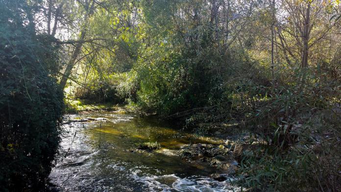 retirada residuos rio Guadarrama