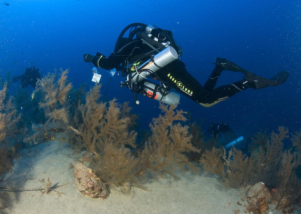 investigación bosques submarinos