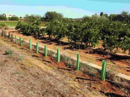 cultivos agrícolas setos