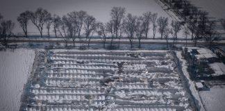 Filomena campos cultivo