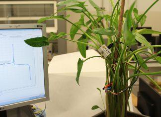 Investigan cómo obtener energía de las plantas con el proyecto Whatchplant