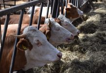 moratoria ganadería industrial