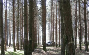 cambio climático producción forestal