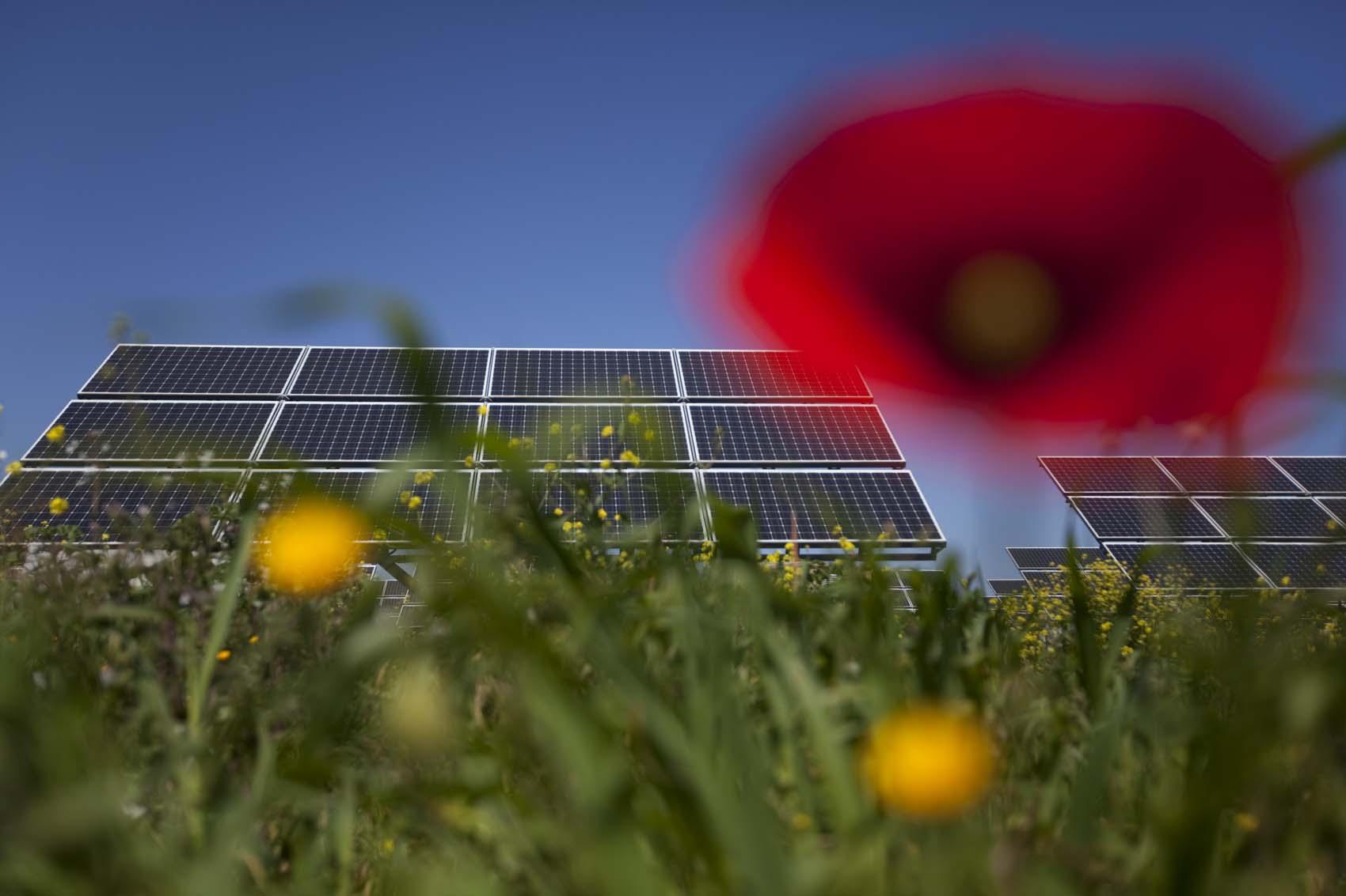 Falck Renewables
